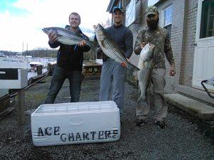Three nice Hudson River striped bass