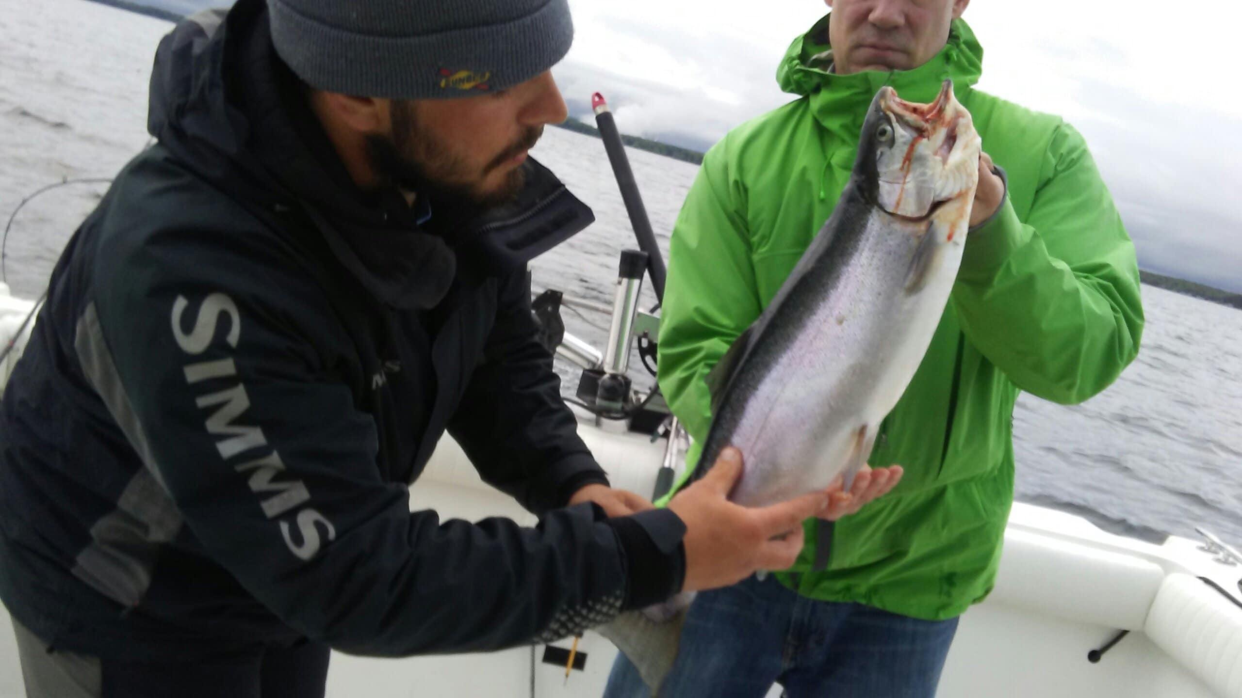 7 LB domestic rainbow trout